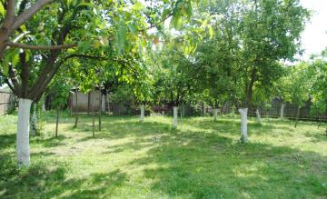 livada-cu-pomi-fructiferi