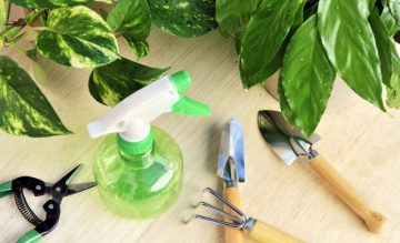 7-pointers-for-treating-your-garden-with-fungicides-1438023775-600x360